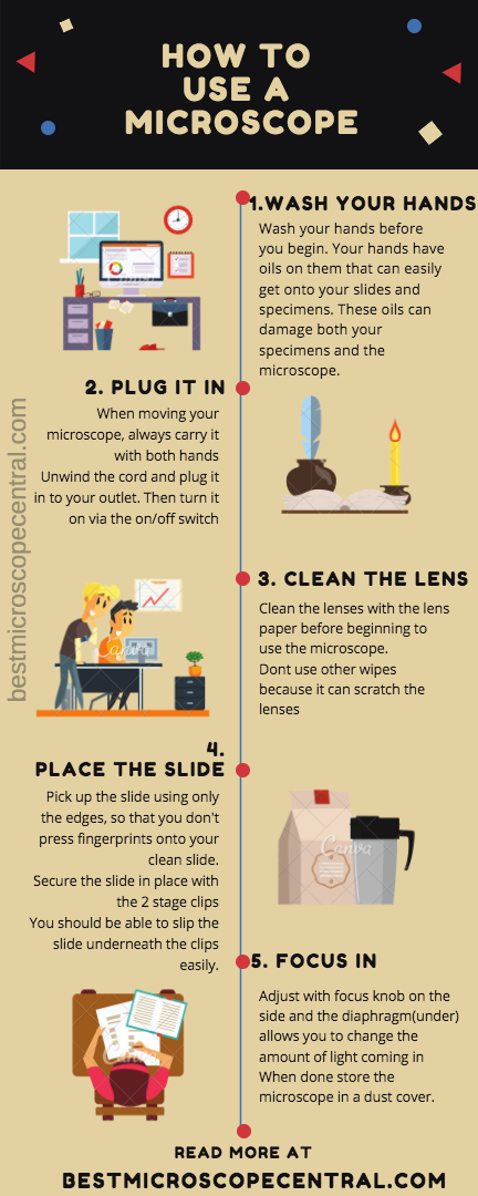 How To use Microscope Step by step Infographic